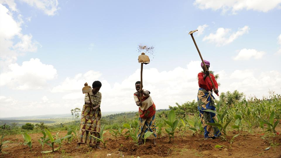 Farmers at the Mayange cluster of Millennium Villages located in the Bugesera district of Rwanda, about 40km south of the capital Kigali. (Image from From the Millennium Village Project.  http://www.millenniumvillages.org/the-villages/mayange-rwanda)
