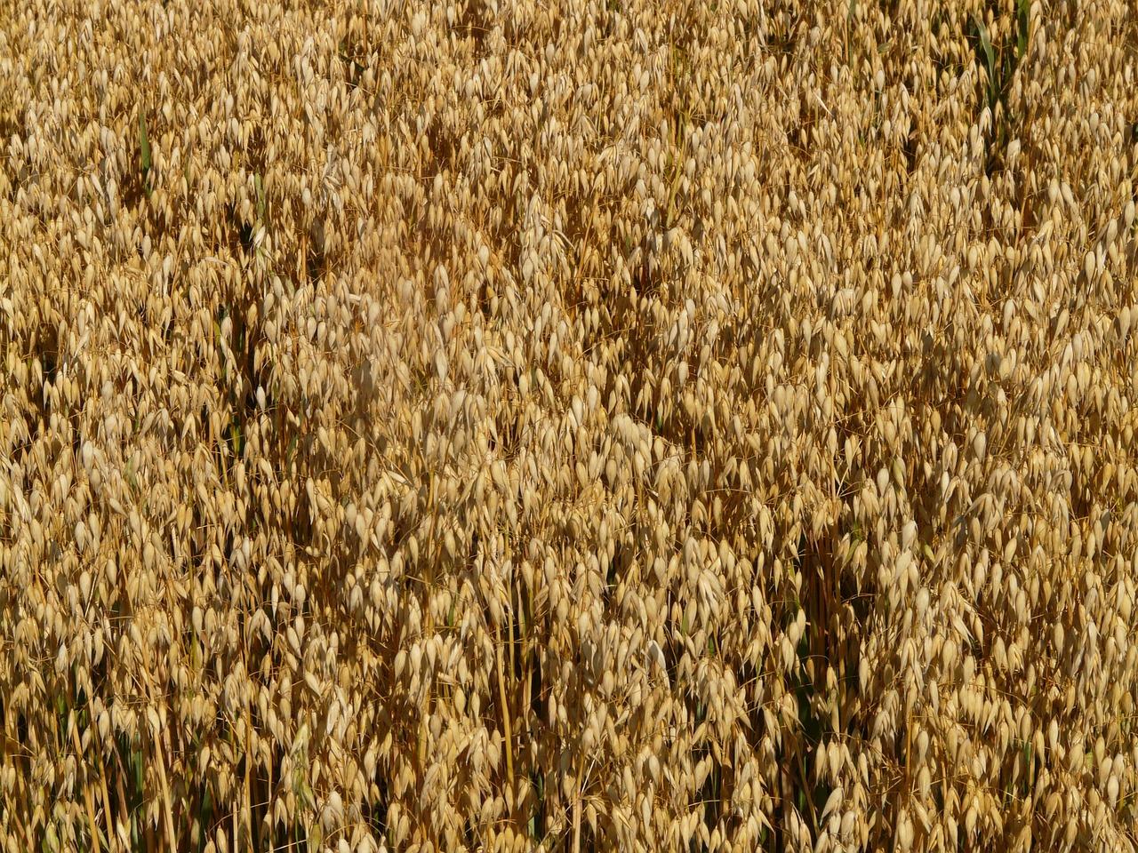 field-8943_1280.jpg