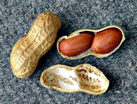 Peanut (groundnut)