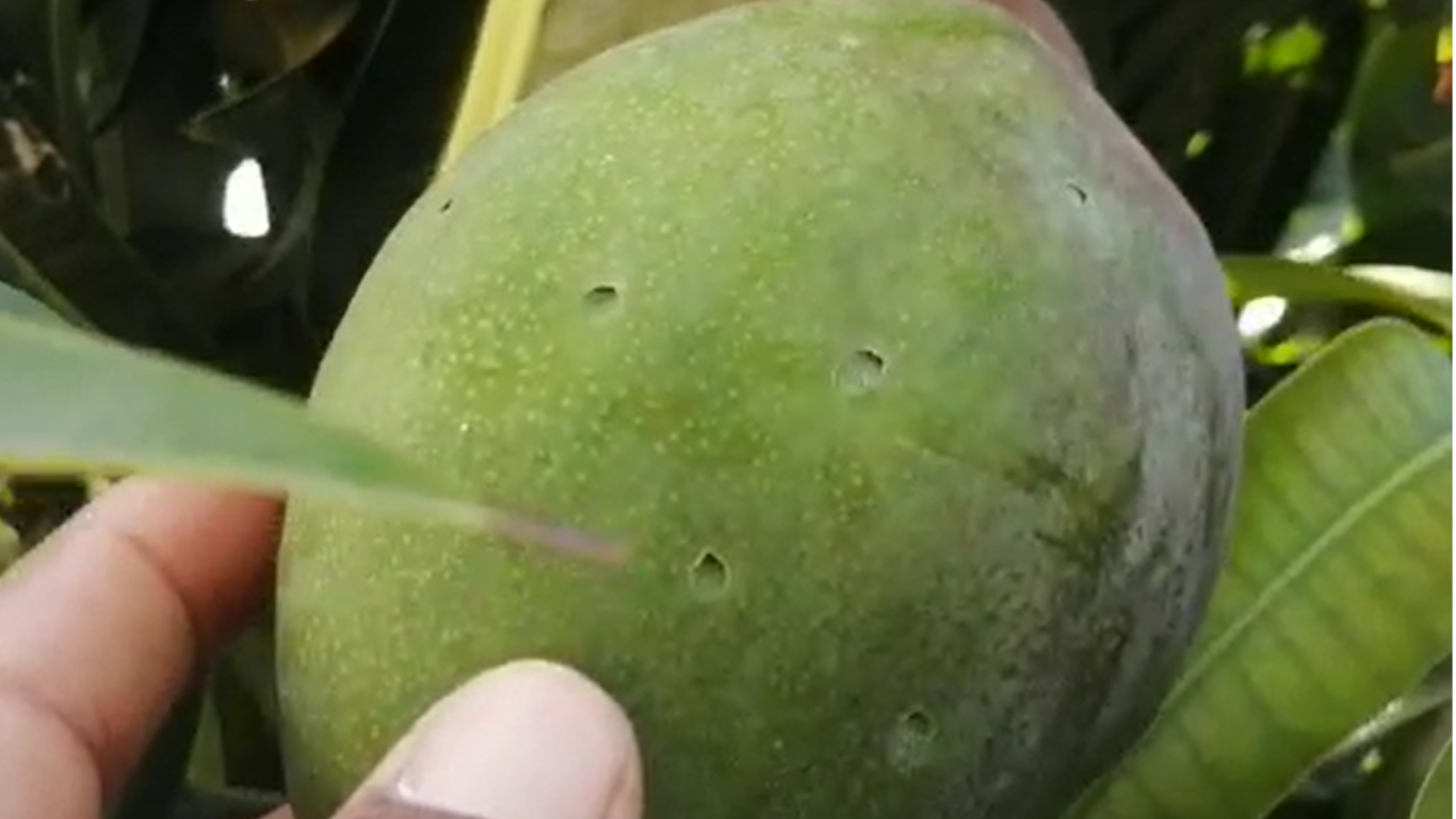 Skin fruits with holes